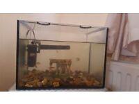 fish tank 20l plus accessorias and fishes