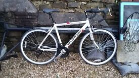 WOODWORM RACING BIKE FOR SALE