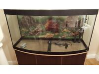 Fluval Vicenza 260 bow front Aquarium and Cabinet