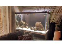 Stunning Large Fish tank / Aquarium - Full Tropical Set Up - 450 ltr - Beautiful Condition