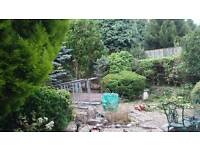 Gardener tress hedges and overgrown gardens