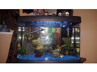 64litre tropical fish tank