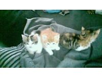 3 cute kittens ready to go