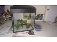 Fish Tank and accessories including stones and net