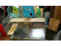 Degu and Ghinchilla cage with accessories