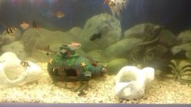4 ft Fish tank white gloss unit including fish