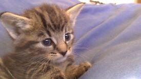 3 Adorable Kittens