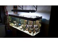 juwel rio 400 fish tank with marine setup complete