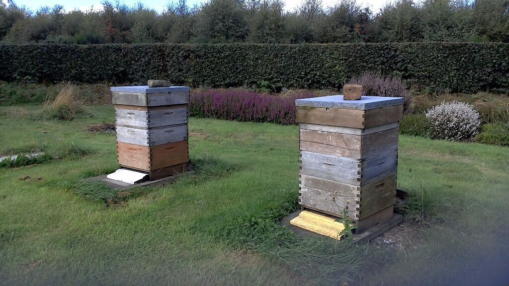 beekeeping . 2 working hives plus a massive lot of EVERYTHING you need for 10 hives