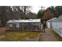 Large & very large greenhouse free to collect