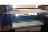 4FT TANK AND EHEIM CABINET