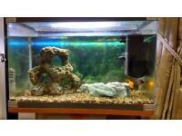Fish , Fully Equipped Tank & Stand