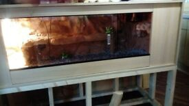 5ft 3d vivarium