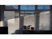 white wooden venetian blind