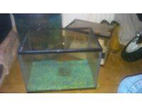 3 small fish tanks
