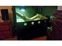 For sale dragon bearded male with Full set up vivarium !!!