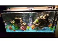 Gorgeous large fish tank with all needed bits to function and extras