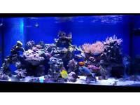 Fish tank . Marine. Coral. Live rock