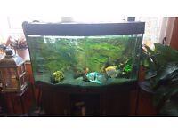 Aquarium Juwel Vision 180 + cabinet. Very good condition