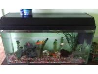 Large fish tank with four goldfish 120 litres.