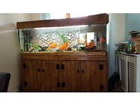 Fish tank and home made stand £350 ono