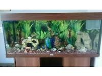 Juwel fish tank 4ft