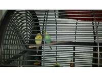 2 budgie and large bird cage