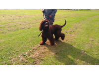 Dog walking no matter what the weather by fully licensed and fully insured home dog boarders