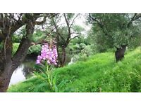 Land in Russia! 80 acres riverfront land & wooden chalet for sale