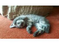 4 adorable kittens looking for family.