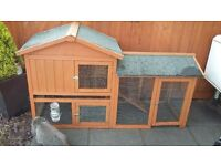mini lop rabbit & hutch