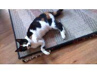 Tortoiseshell Kittens For Sale To Good Home