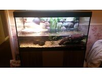2 reeves turtles and setup for rehoming