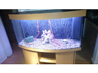 4FT JUWEL VISION 260 LITER BOW FRONTED FISH TANK FOR SALE