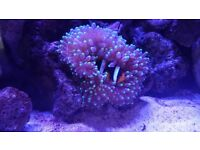Marine corals, anemone and equipment for sale