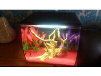 Fish tank fluval flex 34l