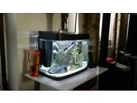 Tropical Fish & Tank