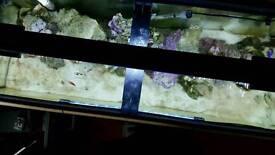 Marine fish aquarium, fish, food, live stone included