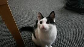 Beautiful pet kitten for sale