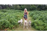 Happyhounds.pet offers a dog walking/doggy day care/dog boarding service in the Fareham area.