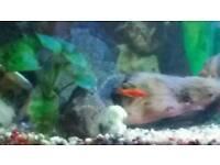 Juwell aquarium