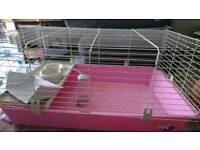 Dwarf rabbit Guinea pig cages