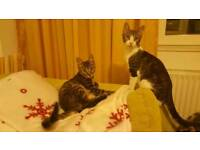 Young cat kittens needing homes