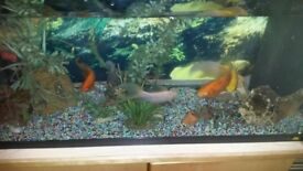 For sale Juwel aquarium 110 L and 4 fish