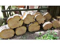 Large Pine Roundels - Logs