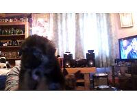 german shepard pup left boy