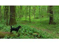 Dog walker Acton