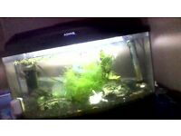 48 litre aquael fish tank and stand with ornaments and rocks if wanted