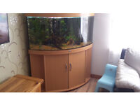 Juwel Trigon 350 liters fish tank
