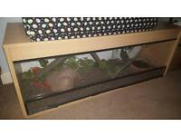 4ft beech vivarium(read ad)
